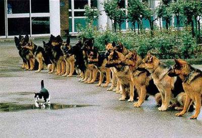 Bravecat